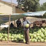 Auf dem Weg in Mbour mal schnell ne Wassermelone gekauft